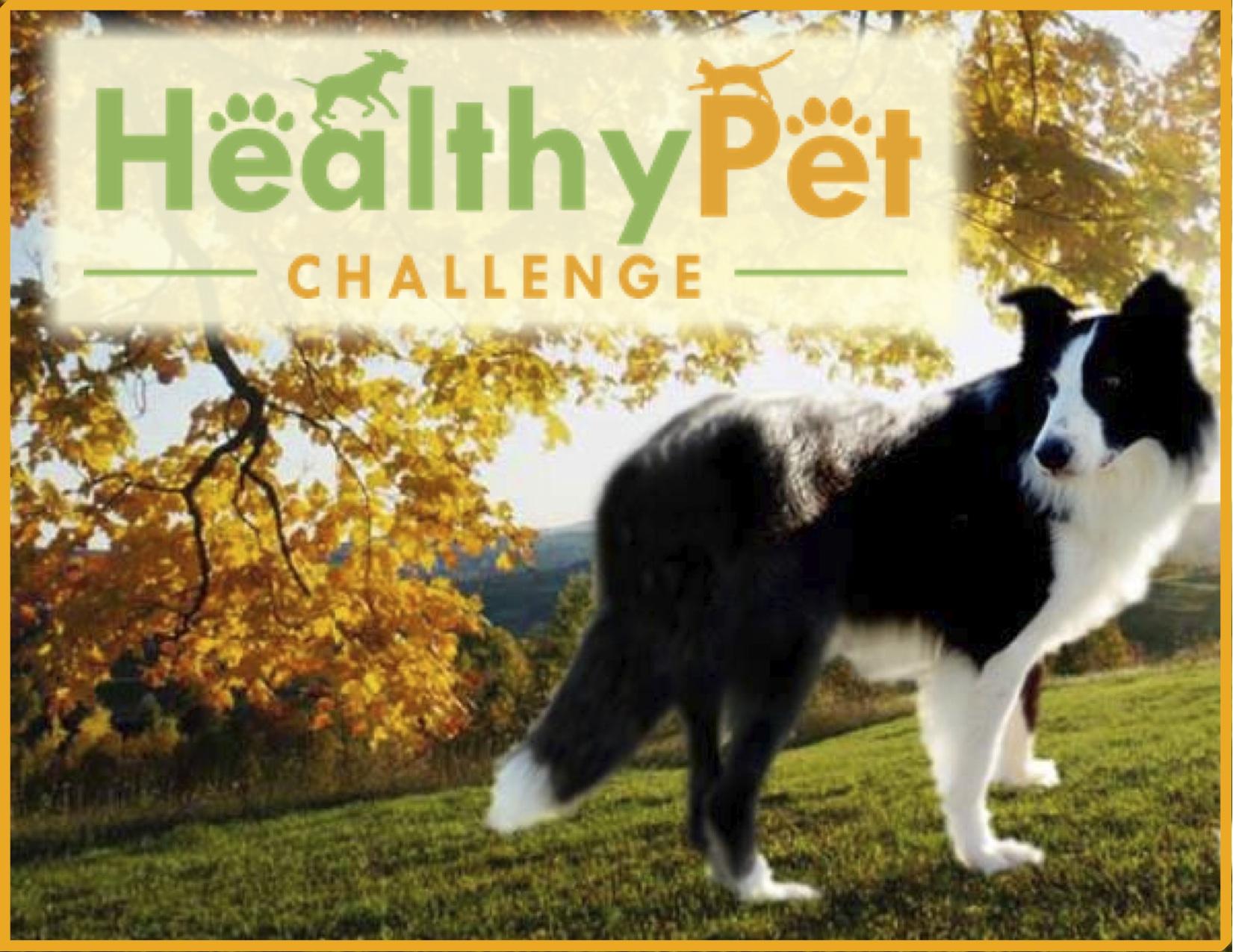 Healthy Pet Challenge