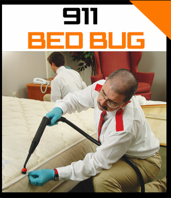 911 Bed Bugs