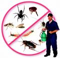 The Pest Detectives LLC