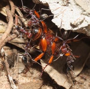 Elk Grove Exterminators