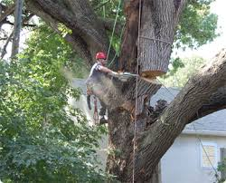 Yard Cleanups Tree Removal