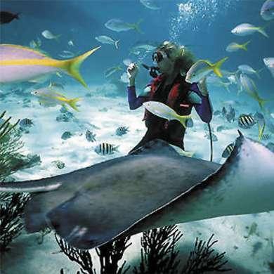 Dive Adventures Asia